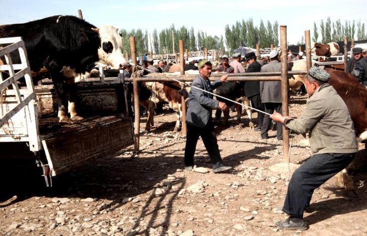 China - Xinjiang 280 - Kashgar - Sunday animal market
