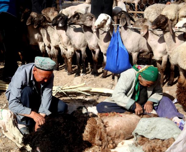 China - Xinjiang 293 - Kashgar - Sunday animal market