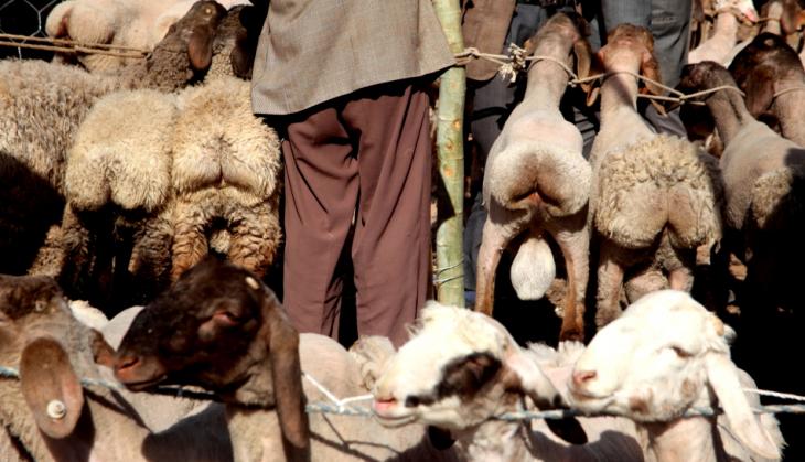 China - Xinjiang 294 - Kashgar - Sunday animal market