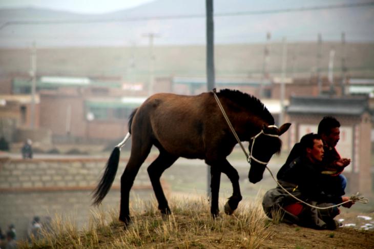 China - Gansu 294 - Xiahe area