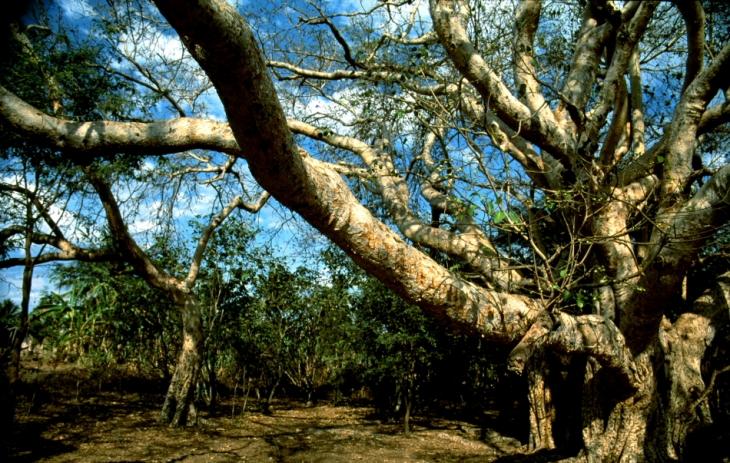 Madagascar 002 - Morondava