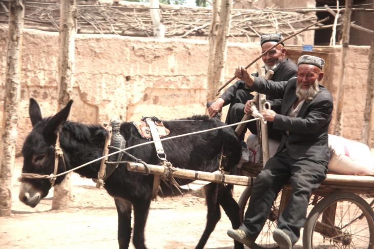 China - Xinjiang 332 - Kashgar - Sunday animal market