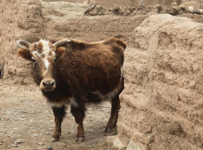 China - Gansu 369 - Xiahe area