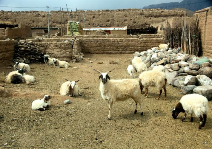 China - Gansu 377 - Xiahe area