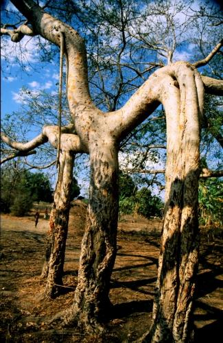 Madagascar 003 - Morondava