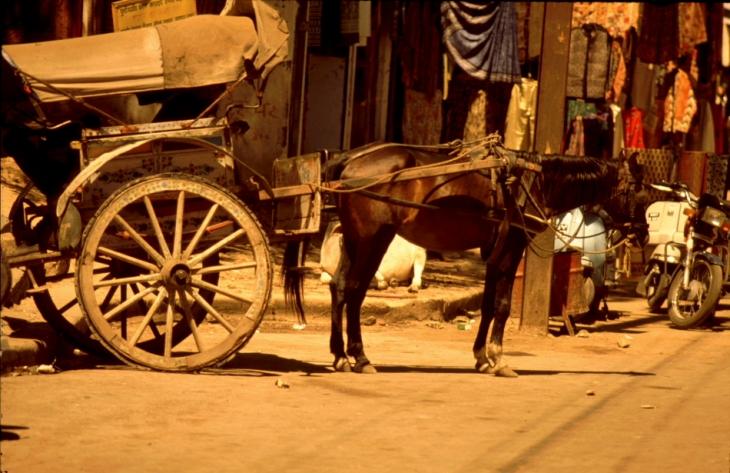 India - Udaipur 43