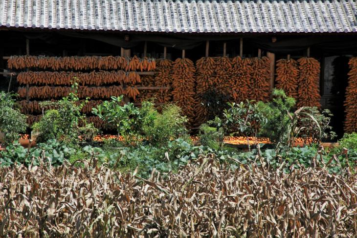 China - Yunnan 537 - Shaxi surroundings