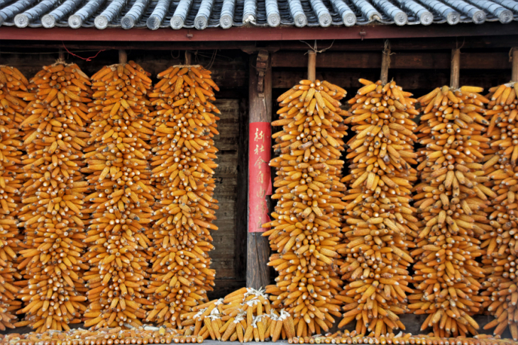 China - Yunnan 574 - Shaxi surroundings