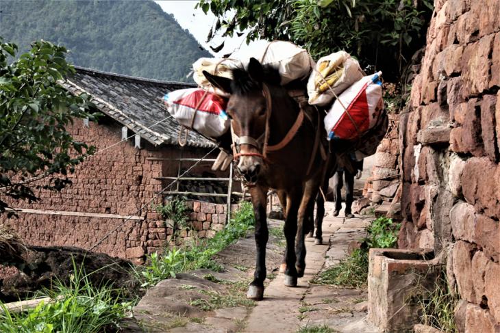 China - Yunnan 644 - Nuodeng