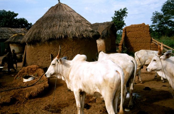 Benin 18 - On the road to Natitingou