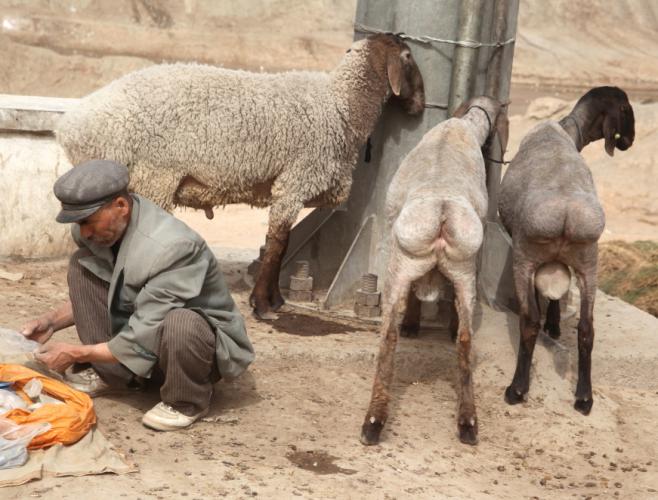 China - Xinjiang 752 - Kuche