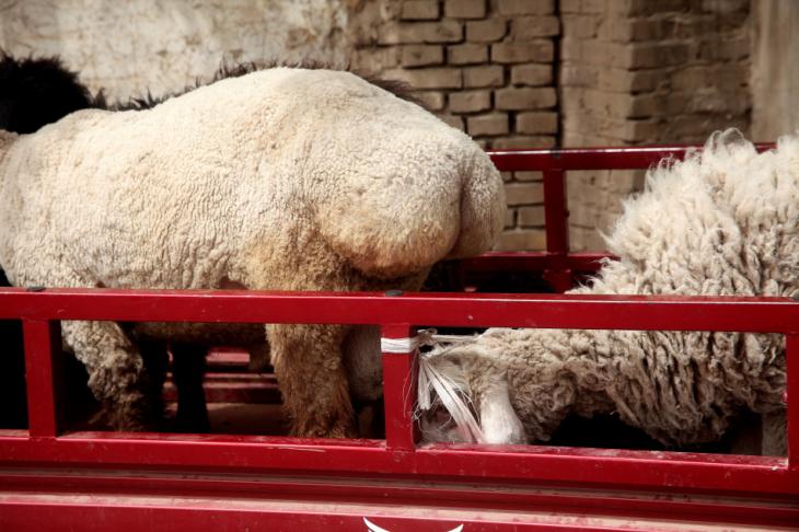 China - Xinjiang 759 - Kuche