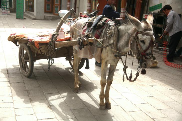 China - Xinjiang 775 - Kuche