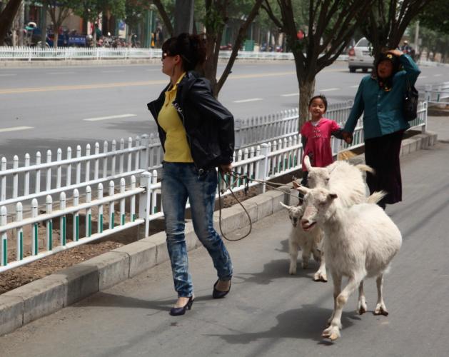 China - Xinjiang 794 - Kuche