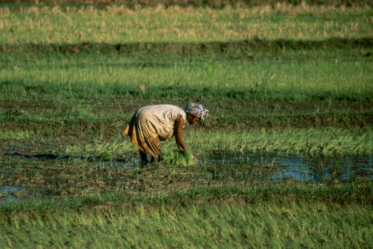 Madagascar - Central Highlands 049