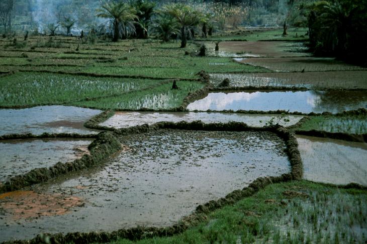 Madagascar - Central Highlands 050