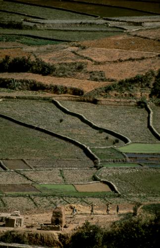 Madagascar - Central Highlands 127