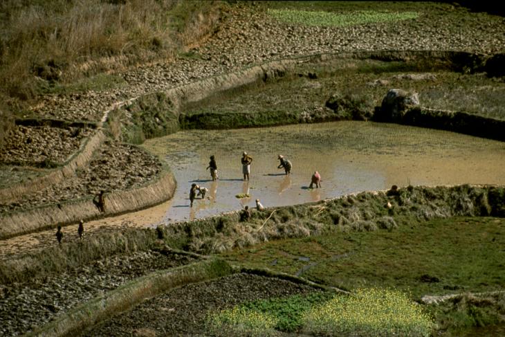 Madagascar - Central Highlands 133