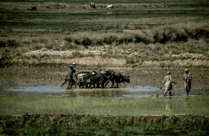 Madagascar - Central Highlands 173