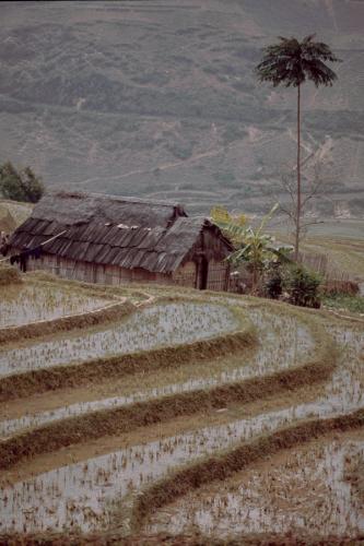 Vietnam - Northern ethnic minorities 002 - Sapa area
