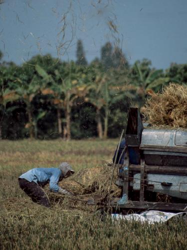 Vietnam - Mekong Delta 106