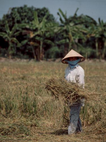 Vietnam - Mekong Delta 108