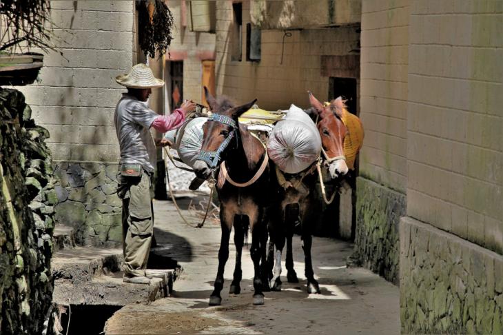 China - Yunnan 132 - Yuanyang - Hani village