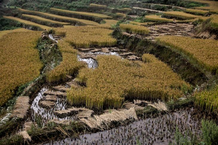 China - Yunnan 143 - Yuanyang
