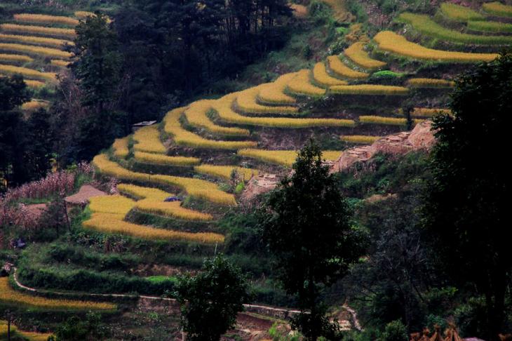 China - Yunnan 144 - Yuanyang