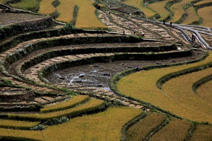 China - Yunnan 147 - Yuanyang