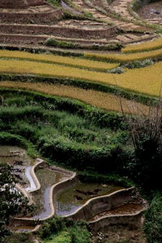 China - Yunnan 152 - Yuanyang