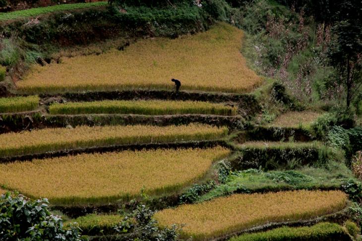 China - Yunnan 154 - Yuanyang
