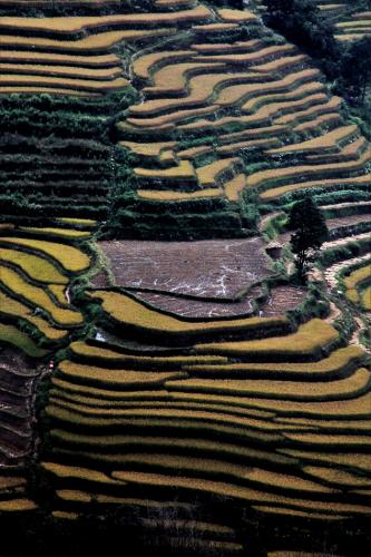 China - Yunnan 159 - Yuanyang