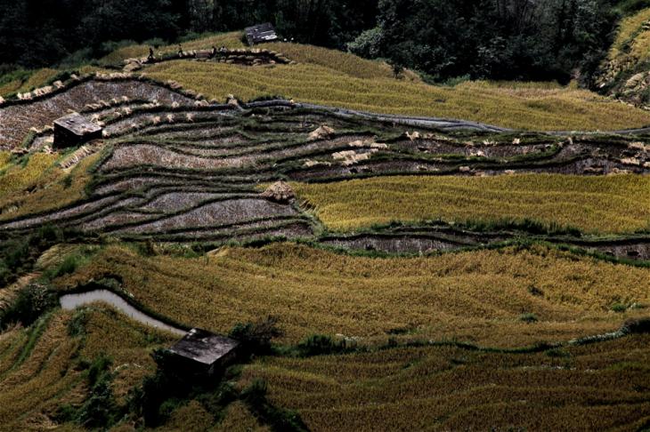 China - Yunnan 161 - Yuanyang
