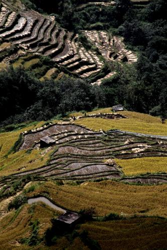 China - Yunnan 162 - Yuanyang