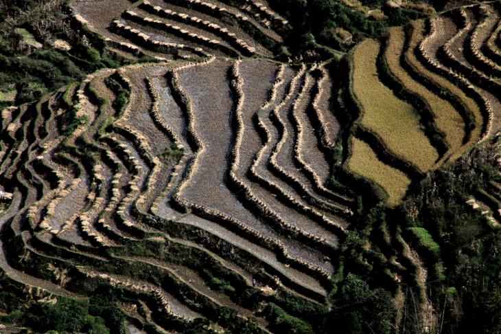 China - Yunnan 164 - Yuanyang