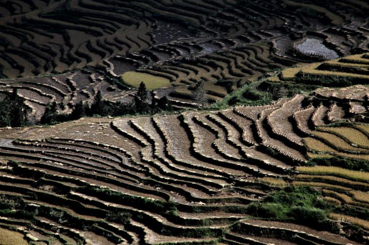 China - Yunnan 165 - Yuanyang