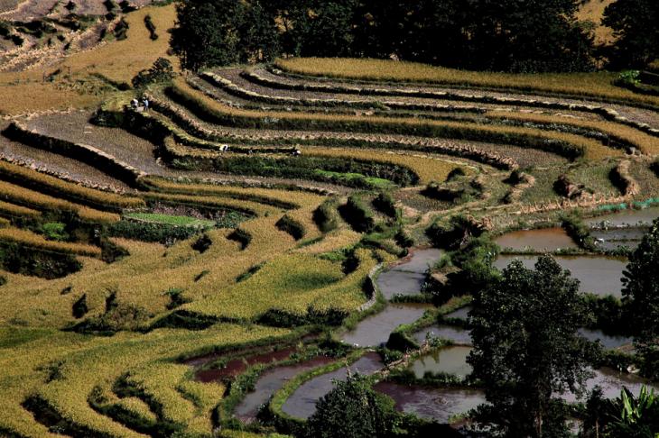 China - Yunnan 166 - Yuanyang