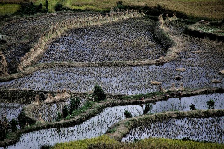 China - Yunnan 179 - Yuanyang