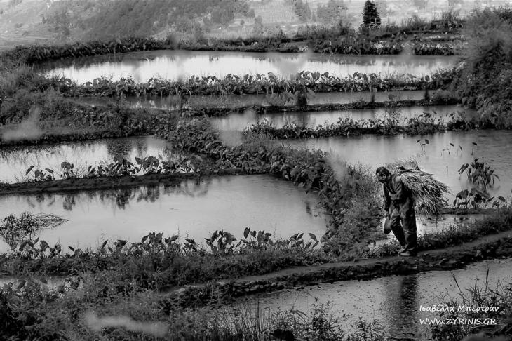 China - Yunnan 193 - Yuanyang