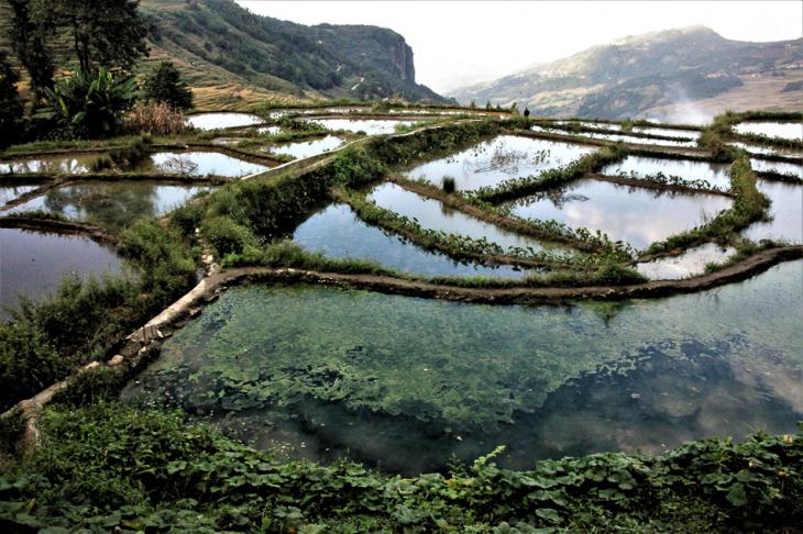 China - Yunnan 195 - Yuanyang