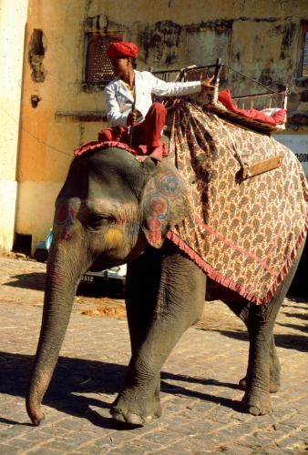India - Jaipur 57 - Amber