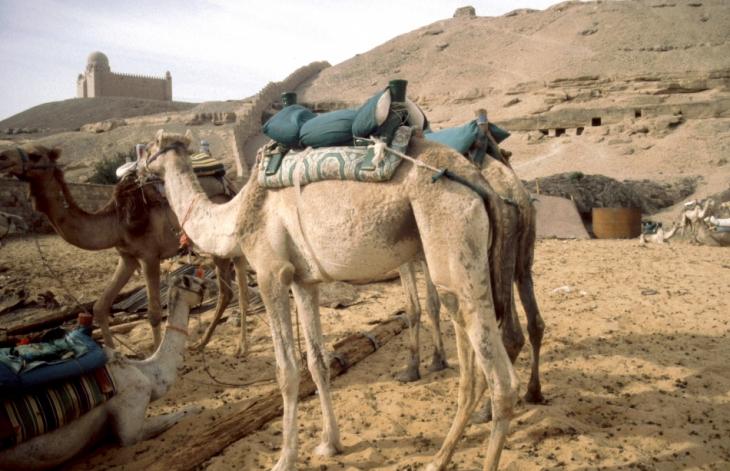 Egypt - Aswan 019 - West bank