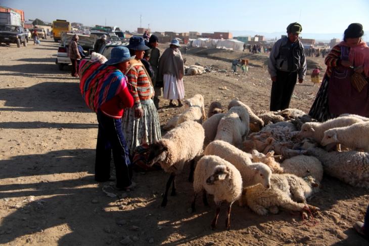 Bolivia - Itinerary La Paz-Sajama-Coipasa 001 / Patacamaya Sunday market