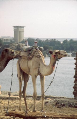 Egypt - Aswan 020 - West bank