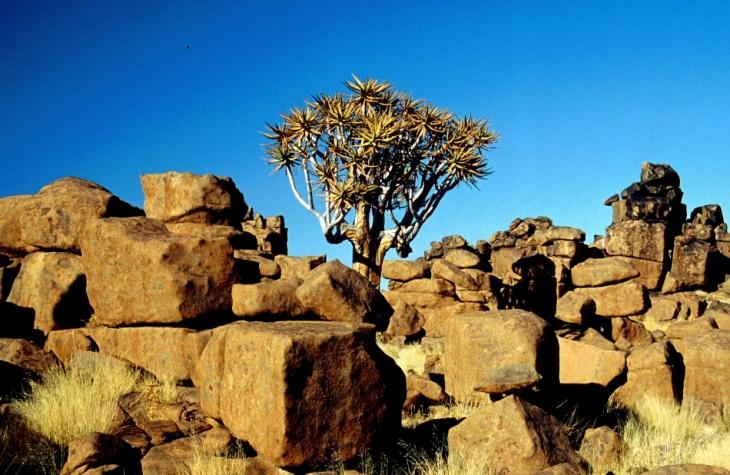 Namibia - Kokerboom 02