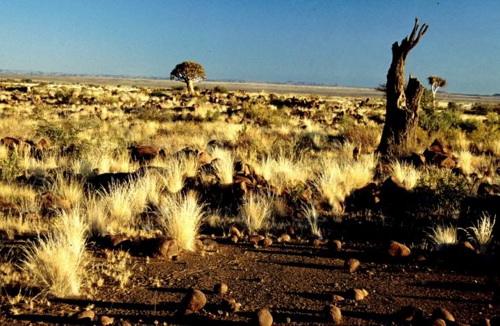 Namibia - Kokerboom 05