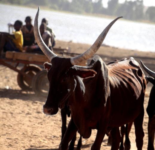 Burkina Faso - Djibo 005