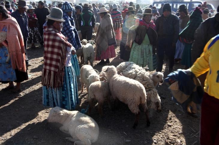 Bolivia - Itinerary La Paz-Sajama-Coipasa 005 / Patacamaya Sunday market