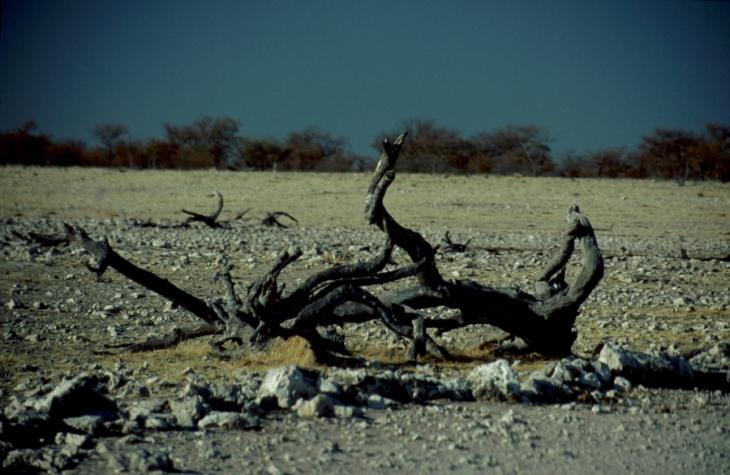 Botswana - Kalahari 20
